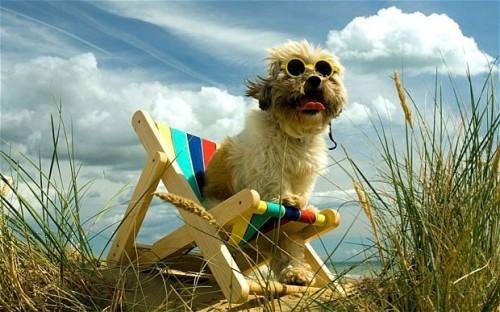A kutyabarátok mostantól személyre szabottan foglalhatnak szállást