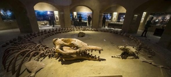 Egyiptomban megnyitották az ősmaradványok és a klímaváltozás múzeumát