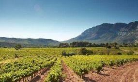 Franciaország borturizmusát bemutató honlap indult