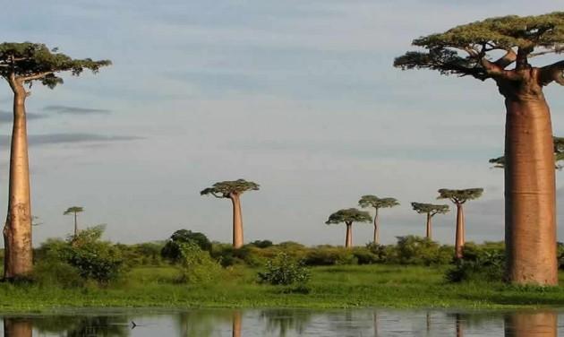 Madagaszkár bemutatkozik