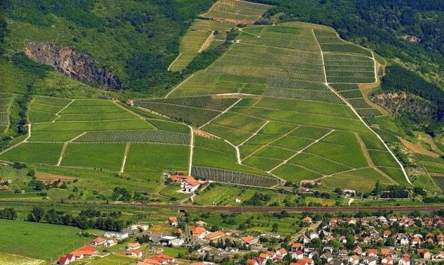 Új alapokon az MTÜ-nél a bor- és gasztromarketing