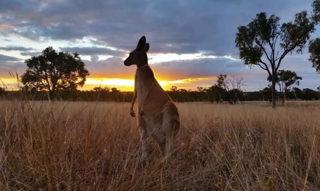 Súlyos bozóttüzek Ausztráliában
