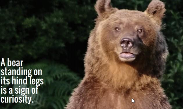 Medvetámadás Szlovéniában