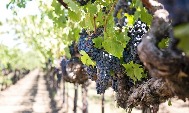 Észszerűbb jelentési kötelezettségekkel kezdődik az új borpiaci év