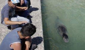 Fókaverésért megbüntettek és kitiltottak az országból egy turistát Horvátországban
