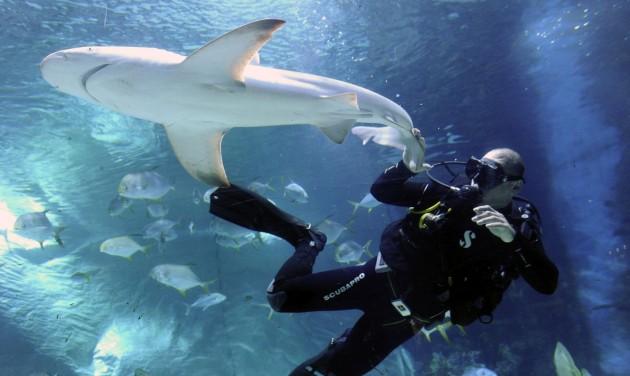 Két cápával gazdagodott a Tropicarium