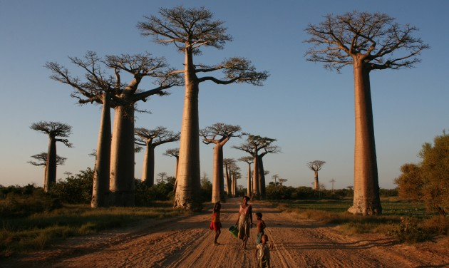 Madagaszkárt egyszer az életben látni kell