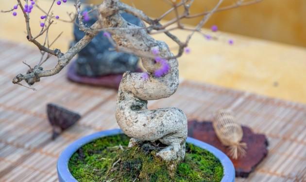 Japánkertet adtak át Gyulán