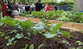 Közösségi kert készül Bécs új városnegyedében