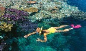 Tízmilliárd dollár kellene a Nagy-korallzátony megmentéséhez