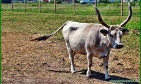 Új állatok, megnövelt terület a Festetics Állatparkban