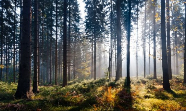 Hétvégi programajánló: Klímaterápia a Bükkben
