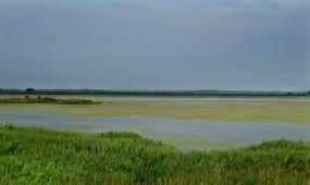 Még több védett vízi madár fészkelhet a Hortobágyon