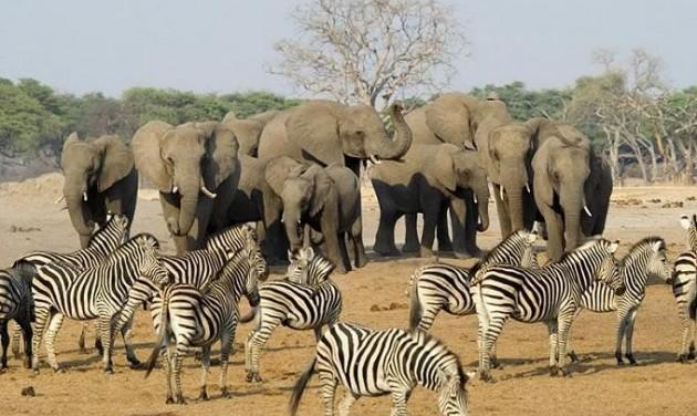 Mesebeli Afrika, Kőbányán