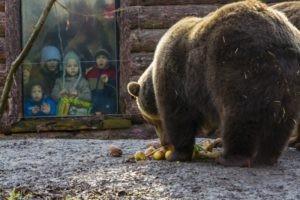 Medveles a Szegedi Vadasparkban