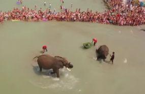 Elefántok a Balatonban