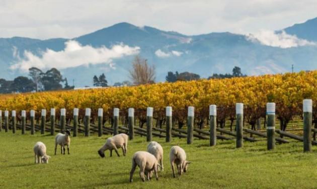 Nő az idegenforgalmi bevétel Új-Zélandon
