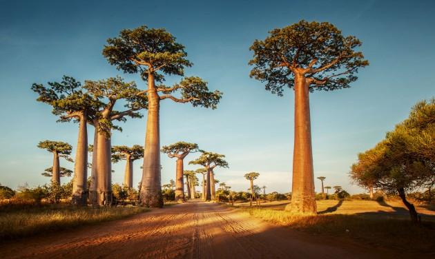 Teljes határzár Madagaszkáron