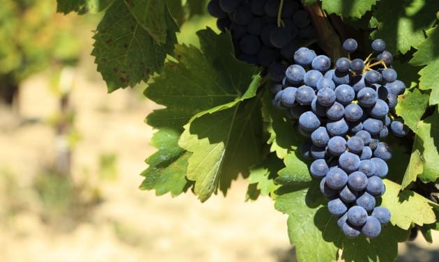 Mediterrán körülmények várnak a magyar bortermelőkre