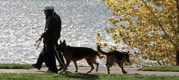 Utazz kutyával! – a Balaton régióban is