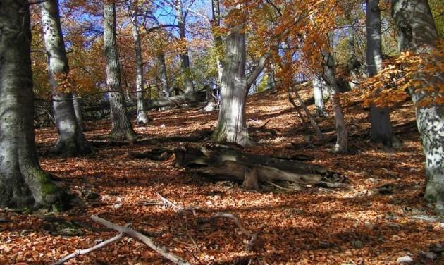 Összefogás a Bükk-vidék Geopark létrehozásáért