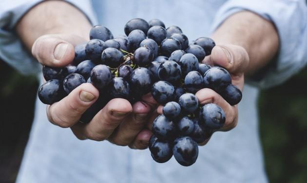 A bortermelők 56 százaléka kisüzemi státusban
