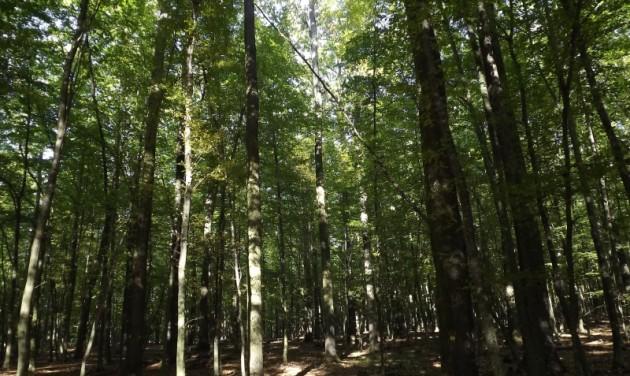 Hatvan hektár új erdő Somogyban