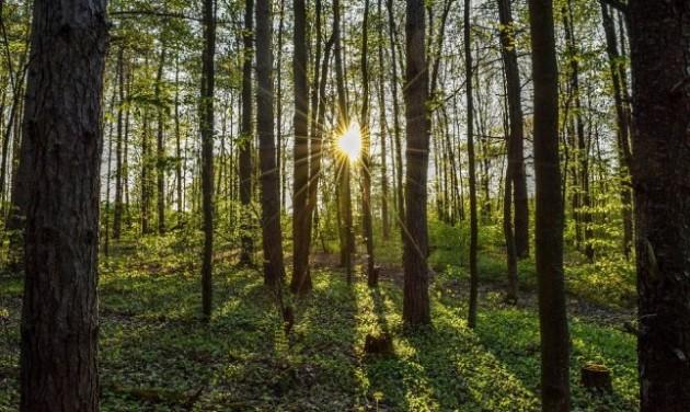 Hétvégi programajánló: Muzsikál az erdő a Körösök völgyében