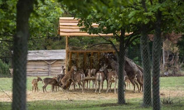 Muflonkert és emufuttató a sukorói vadasparkban