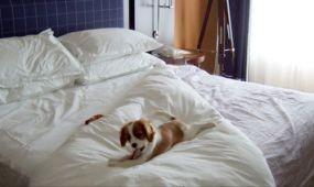 Kiskutyát, golyóálló mellényt és gyémánt fülbevalót is felejtettek már hotelszobákban