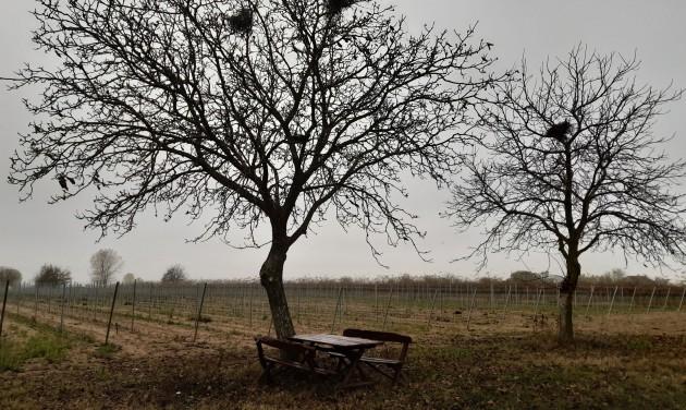Kecskeméttől Soltvadkertig a Duna Borúton