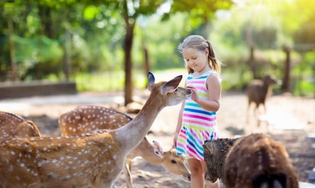 Támogatást kaphatnak a magánalapítású állatkertek