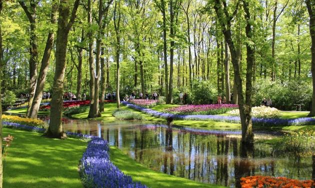 Csúcson a tulipánszezon Hollandiában