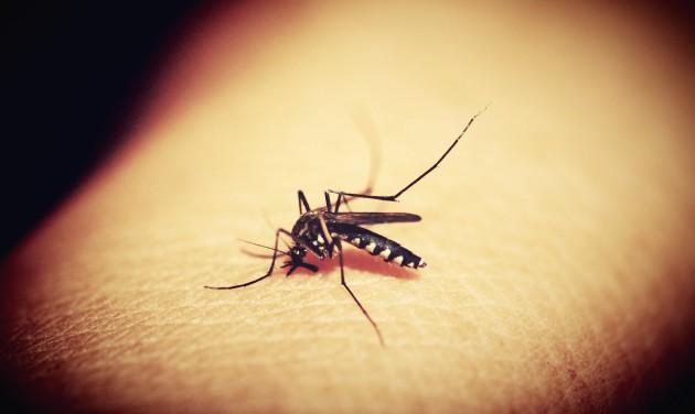 Rossz hír a balatoni szúnyogoknak