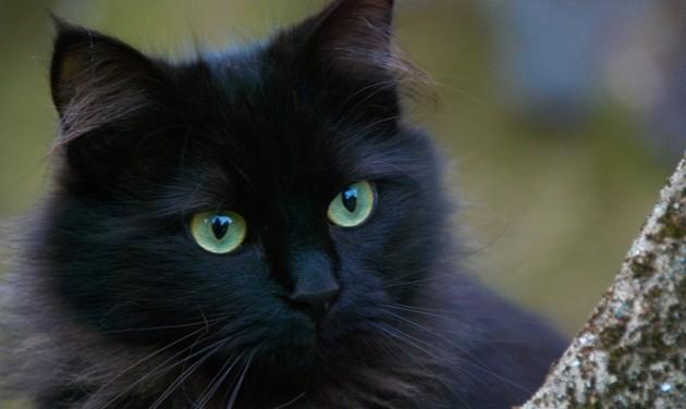 Macskák munkában – a Bulgakov-múzeumban