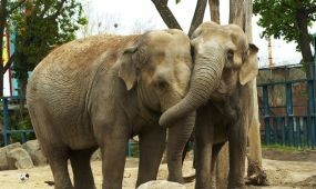 Elérte a 2014-es látogatói számot a budapesti állatkert