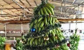 Madagaszkáron már áll a Karácsonyfa