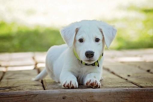 Te miért nem vagy kutyabarát szolgáltató?