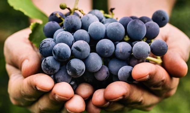 A borpiac szereplőit segíti a Hegyközségek Nemzeti Tanácsa