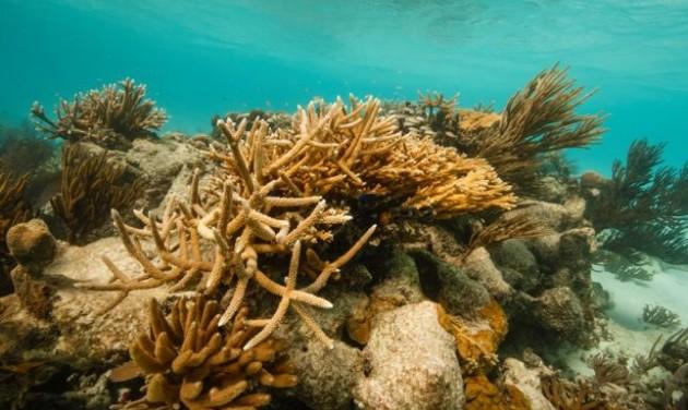 Megmenekül a belize-i korallzátony