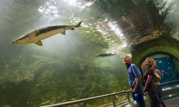 Egymilliomodik látogató idén a Tisza-tavi Ökocentrumban