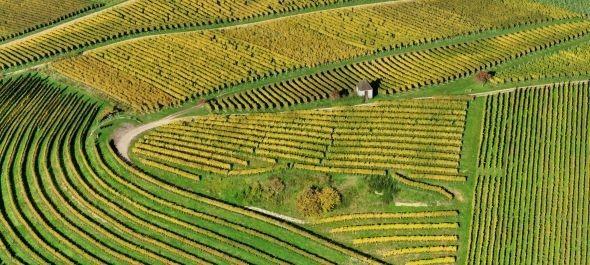 Hegyközségek: a kisüzemi státus hatezer bortermelő terheit csökkenti