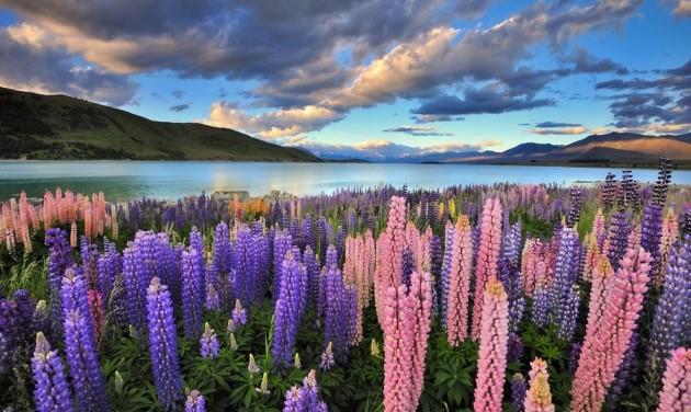 Virágzik az új-zélandi turizmus