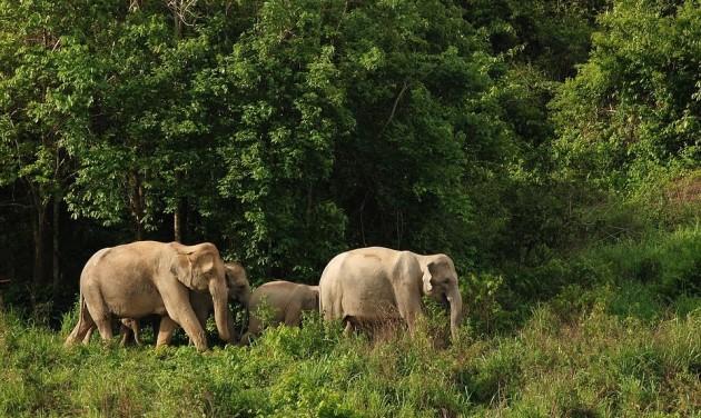 Engedd szabadon az elefántokat!