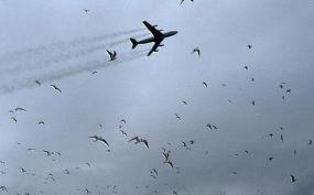 Madárrajjal ütközött egy gép a debreceni repülőtéren