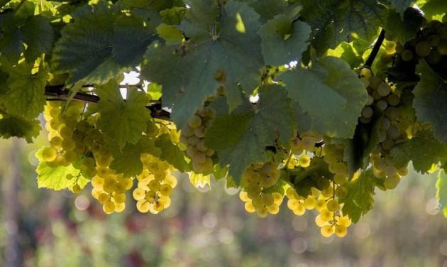 Elkészült a kisüzemi bortermelői nyilvántartás koncepciója