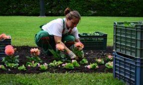 Tervezd meg a budapesti virágoskerteket!