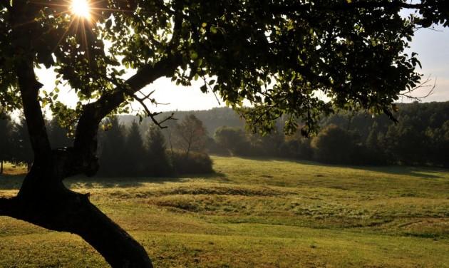 370 ezer őshonos fát ültettek el az Őrségi Nemzeti Parkban