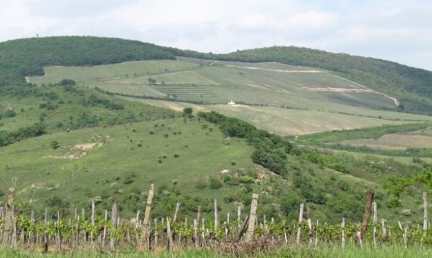 A magyar borok erősíthetik az országmárkát