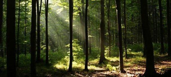 Erdők Napja az Ipoly Erdő Zrt.-nél